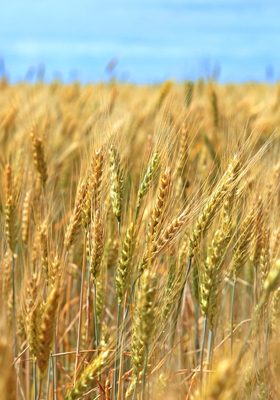 Brokers buying and selling Durum Wheat futures